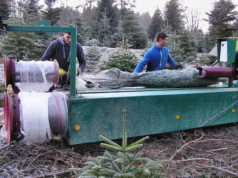 Weihnachtsbäume einnetzen